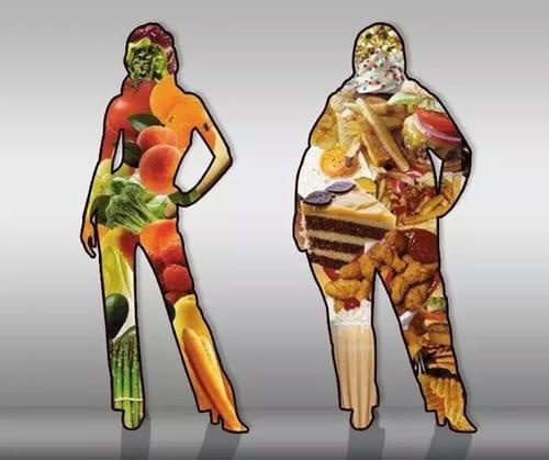 Alimentação – Somos o que comemos