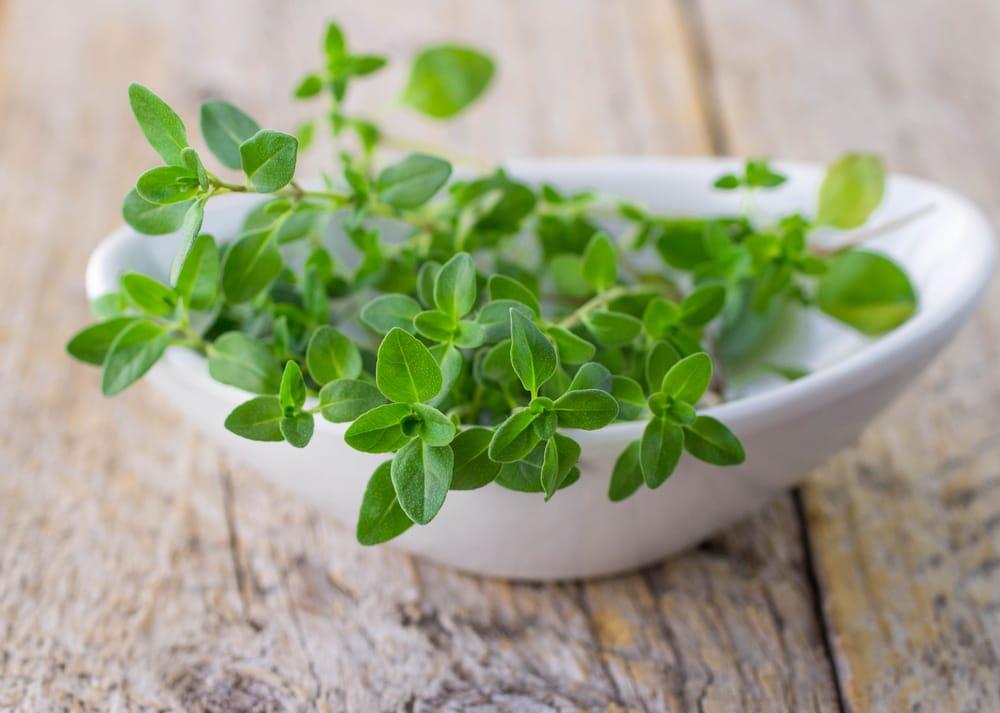 Tomilho - Benefícios para a saúde