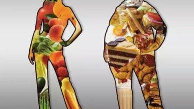 Photo of Alimentação – Somos o que comemos